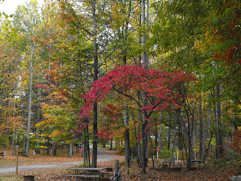 shenandoah-hills-campground-with-beautiful-fall-colors-in-virginia