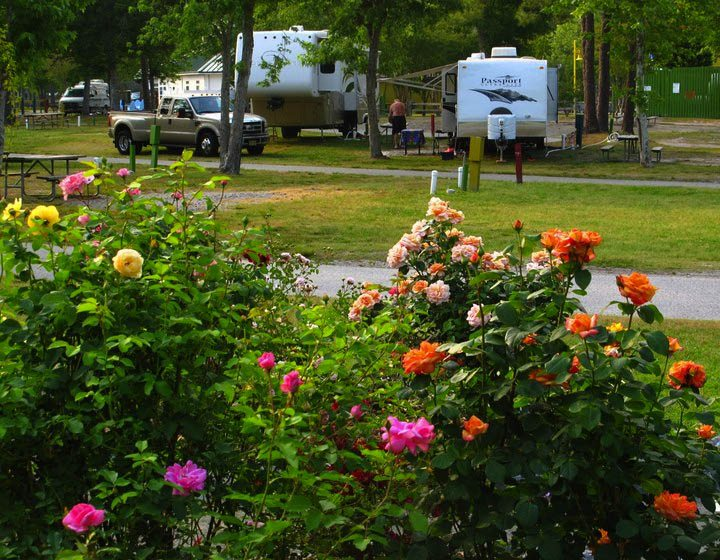 camping-in-the-roses
