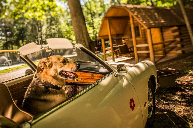 small-dog-in-front-of-cabin