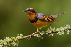 Virginia Bird Watching