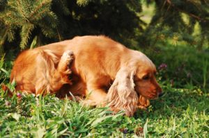 dog scratching tick prevention