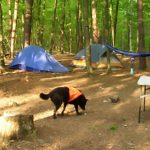 dog at tenting campsite at The Cove Campground in Virginia
