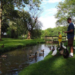 young boy and man feeding ducks